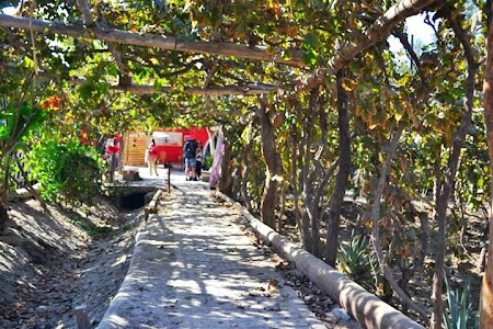 Obiective turistice Peru: Crama - Ica