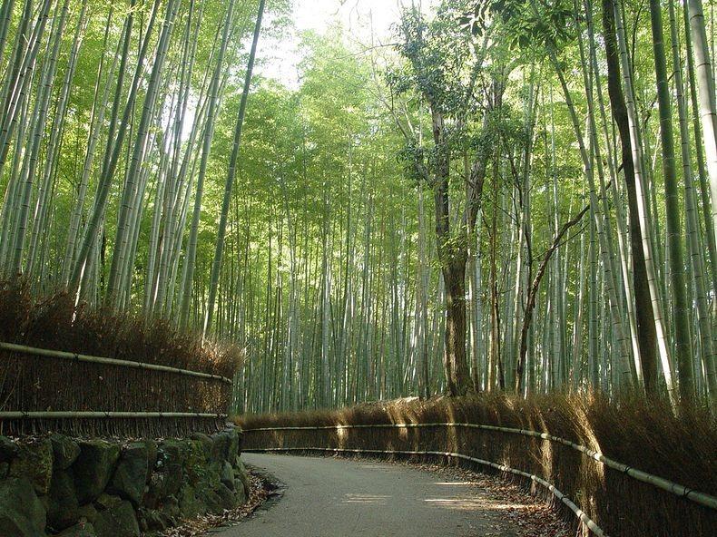 Arvind S Sagano Bamboo Forest At Arashiyama Kyoto