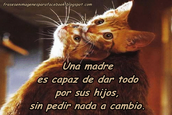 Frases De Amor De Una Madre Para Un Hijo Quotes Links