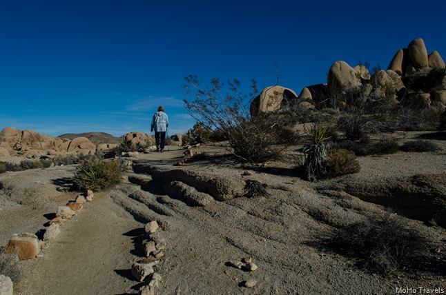 Joshua Tree Morning (7 of 54)