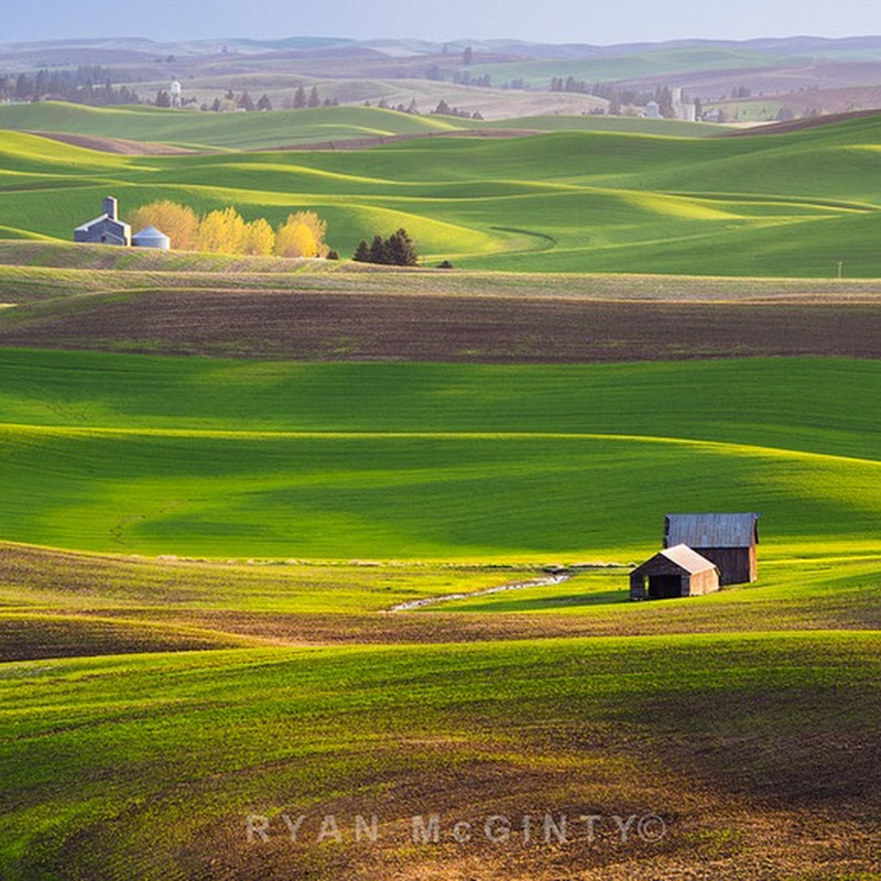 Colorful Rolling Grasslands of Palouse