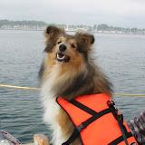 Skibshunden Fabi
