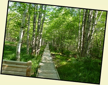 01b - Jesup Path - boardwalk