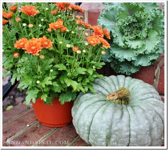Heirloom pumkins, mums, kale