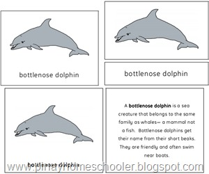 The Bottlenose Dolphin Preview