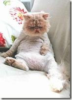 gato 34 (15)