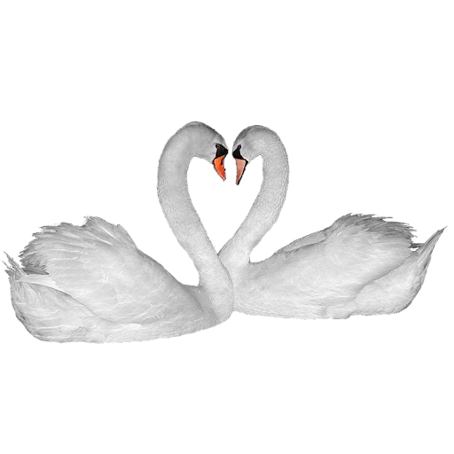 Widgets store: Swan couple