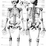 esqueleto-sednaal.jpg