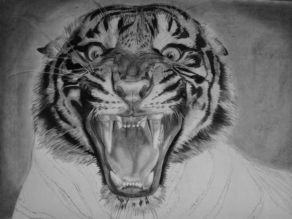 It is a picture of Refreshing Roaring Tiger Drawing