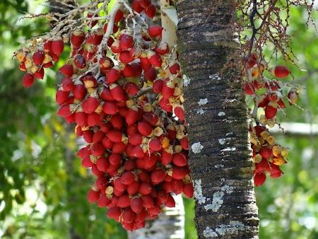 Gradina botanica din Mauritius