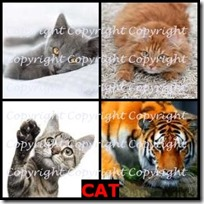 CAT- 4 Pics 1 Word Answers 3 Letters