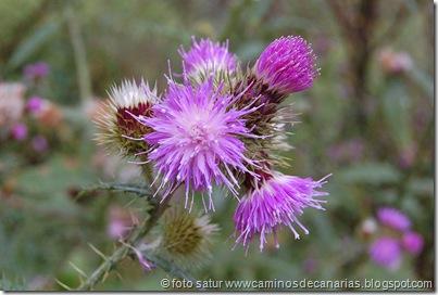 0657 Cruz Llanos-Utiaca(Cardo monteverde