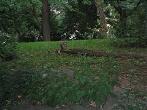 304 - Los pobladores de central park.jpg