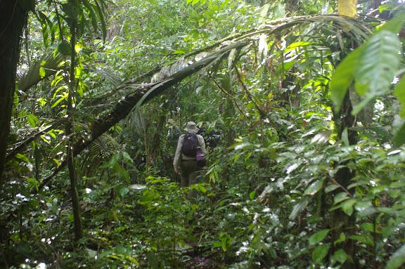 Dans la forêt près de Saut Athanase. 19 novembre 2011. Photo : J.-M. Gayman