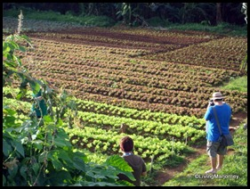 Costales Farm in Majayjay, Laguna (15)