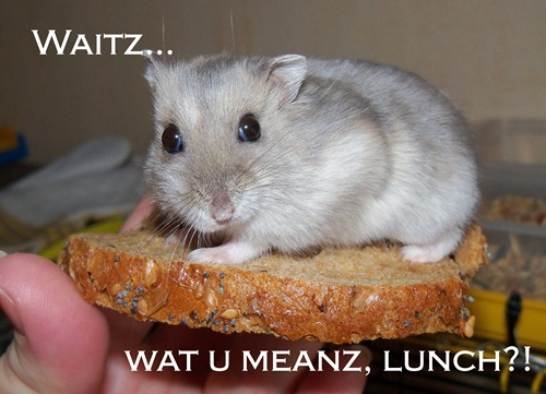 hamster lunch