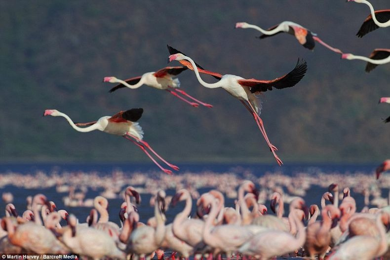 lake-nakuru-flamingos-0