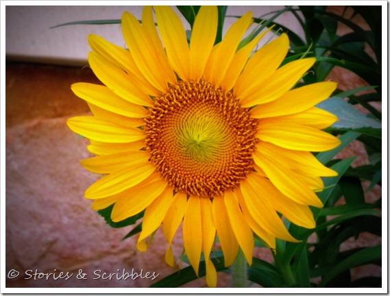 Summer flowers (1)