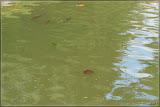 Fische und auch Schildkröten leben hier