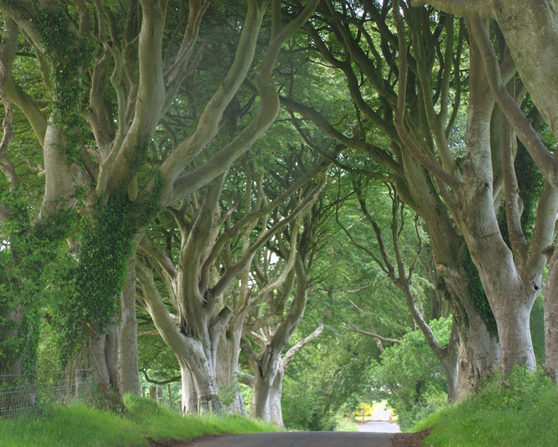 dark-hedges-1