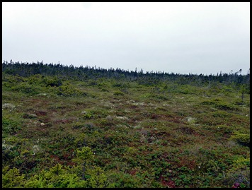 04w4 -  Hike - The Bog
