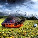 Florida Redbelly Cooter