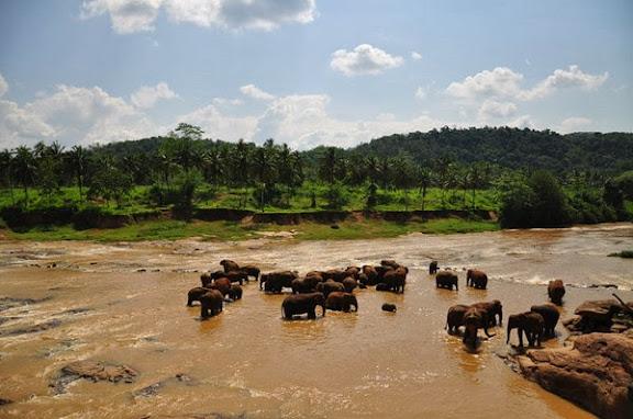 大象收容.jpeg