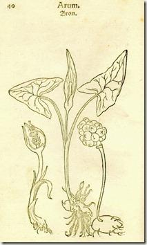 fuchs botanical