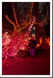 2011Dec31-Brookside-Gardens-77