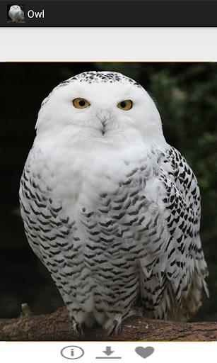 【免費娛樂App】OWL-APP點子
