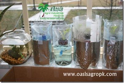 Hydroponic Lettuce Garden In Plastic Bottles