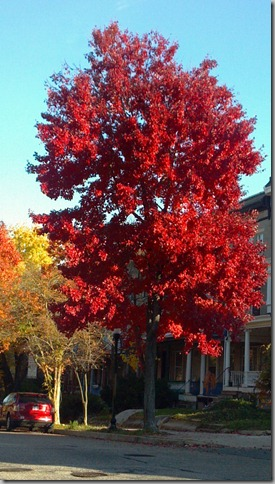 red tree (3)