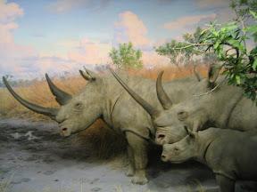 325 - Rinocerontes.jpg
