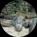 Image Google de sylvie brun