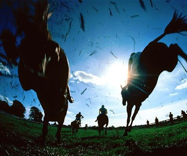 3D Horse Racing Wallpaper