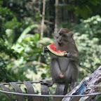 附近也有很多猴子呢,要小心你的食物,不然会成为他们的食物。。