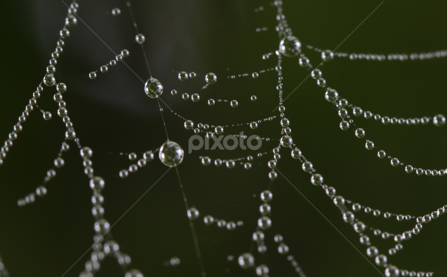 Water Web by Janet Lyle - Nature Up Close Water ( water, web )