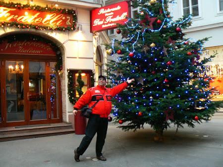 Obiective turistice Austria: brad de Craciun Viena