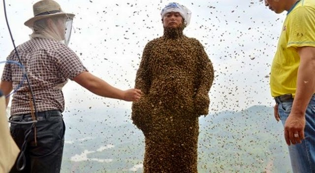 most-bees-on-a-person