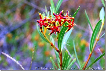 431 Arteara - S. Fernando(Flor del Cornical)
