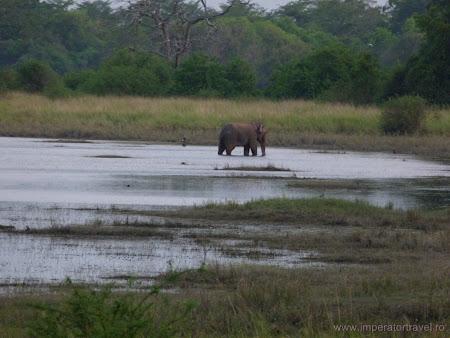 14. elefant salbatic Sri Lanka.JPG