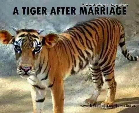 Tigar After Marriage Creative Images For Whatsapp