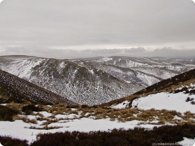 scottish cheviots