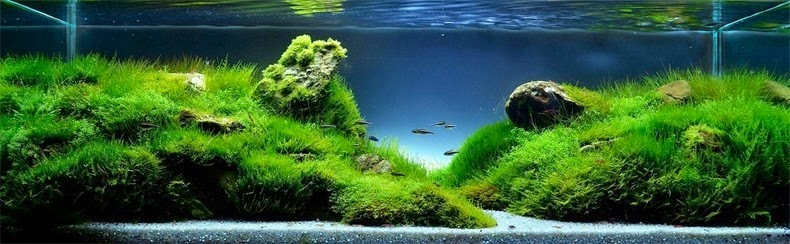 aquascaping-10