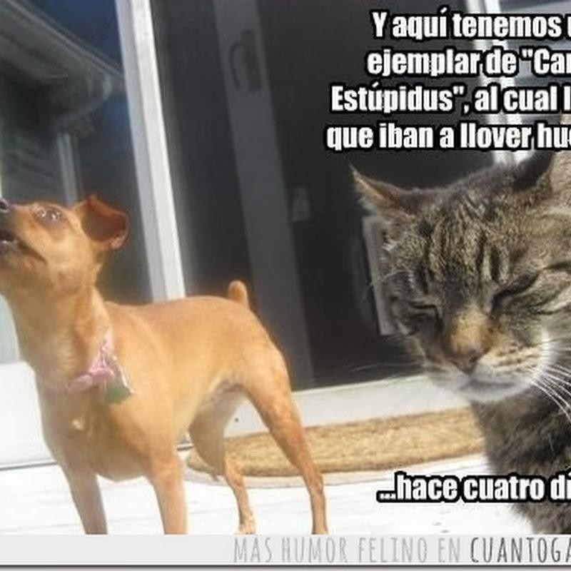 Humor Perro Tonto