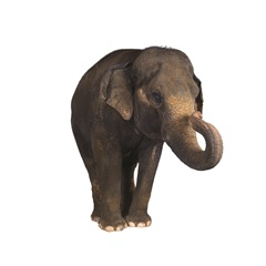 living things example elephant