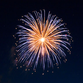 blooms by Jody Jedlicka - Abstract Fire & Fireworks ( america, midwest, fireworks, summer, independence day )