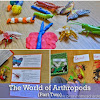 The World of Arthropods for Kids (Part Two)