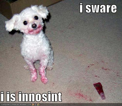 Funny Dog Quotes funny cute sayings [2]   Quotes links Funny Dog Quotes
