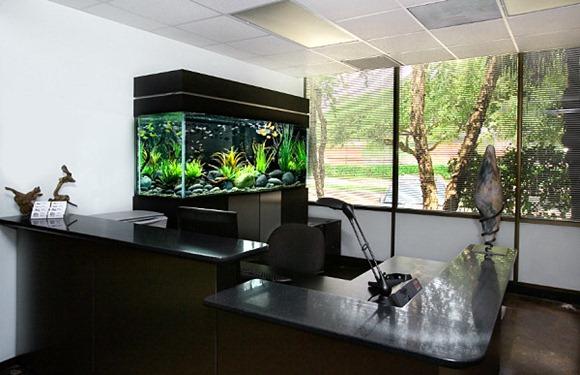 10 modelos de oficinas con peceras idecorar for Modelos de oficinas en casa